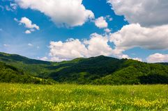 Grassy fields with wild herbs in mountains. Beautiful summer landscape in Ukrainian alps under the blue sky with clouds on a sunny day Stock Photography