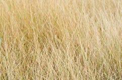 Grassy fields Stock Image