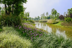 Grassy and flowering waterside in sunny spring Stock Photography