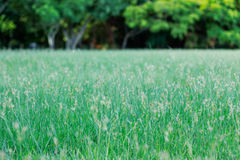 Grassy flowers in park. Stock Images