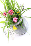 Grassy flowers in a pot Royalty Free Stock Image