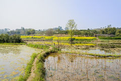 Grassy footpaths in irrigated land on flowering spring day. Chengdu,China Royalty Free Stock Photos