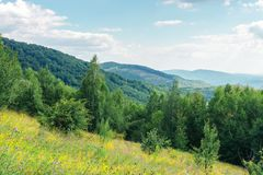 Grassy forest glade on the hill in summer. Wild flowers and herbs among the tall grass.  high deciduous trees around. nature scenery with cloudy sky. mountain stock photos