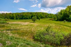 Grassy glade on hill among the forest. Lovely nature scenery under the clouds on a blue sky in springtime Stock Image