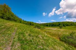 Grassy glade on hill among the forest. Lovely nature scenery under the clouds on a blue sky in springtime Stock Photo