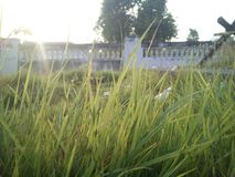 Grassy grass wall decorated for beauty Stock Photography