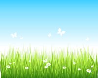 Grassy green field and blue sky stock illustration