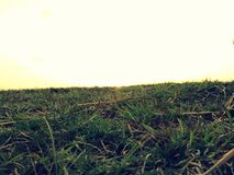 Grassy ground Stock Photos