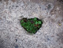 Grassy Heart. Concrete ground with a heart-shaped broken patch filled with weeds Royalty Free Stock Photo