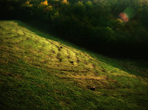 Grassy Hill Background Royalty Free Stock Photos