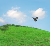 Grassy Hill With Butterfly. Green grassy hill with wildflowers and butterfly under a sunny sky Stock Photo