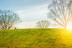 Grassy hill. And trees gold course against blue sky and sunset, toned Royalty Free Stock Photos