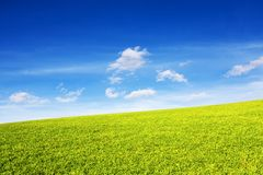 Grassy hill in the rays of the sun under a blue sky. Hill under the blue sky. Rural landscape Royalty Free Stock Photography
