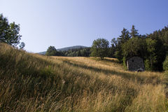 Grassy hill. View of a grassy hill on a beautiful day in the morning Stock Images