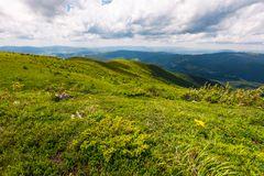 Grassy hills of Carpathian alps in summer. Beautiful nature scenery on a cloudy day Royalty Free Stock Image