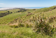 Grassy hills at Farewell Spit, Golden Bay, South Island, New Zealand Royalty Free Stock Images