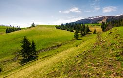 Grassy hills at the foot of the ridge. Beautiful nature scenery of Borzhava mountain ridge. springtime landscape with snowy mountain tops in the distance royalty free stock photography