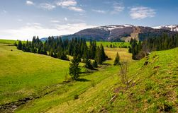Grassy hills at the foot of the ridge. Beautiful nature scenery of Borzhava mountain ridge. springtime landscape with snowy mountain tops in the distance royalty free stock images
