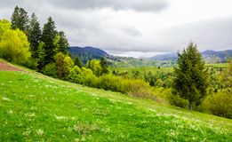 Grassy hills of mountainous rural area. Beautiful springtime countryside landscape Royalty Free Stock Photography