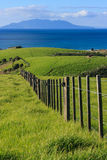 Grassy hills at Tawharanui Park Stock Photography