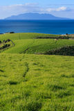 Grassy hills in Tawharanui regional park Royalty Free Stock Photography
