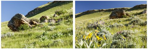 Grassy hillside balsam root minerals collage. Sunny blue sky green grassy meadow hills balsam root flowers geologic formations western countryside collage Stock Photography