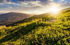 Grassy hillside  in Carpathian mountains at sunset. Grassy meadow on hillside of  mountain ridge on a beautiful sunny summer sunset. wonderful Carpathian Stock Photos