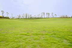 Grassy hillside lawn in cloudy summer Stock Photography