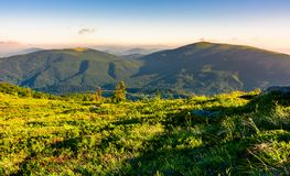 Grassy hillside meadow in the morning. Two mountains in the distance in beautiful light Royalty Free Stock Image