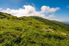 Grassy hillside of mountain in summer Stock Image