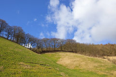 Grassy hillside with trees Royalty Free Stock Photos