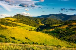 Grassy hillsides in high mountains in afternoon. Beautiful summer landscape with Borzhava mountain ridge in the distance Stock Photo