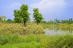 Grassy lakeshore in sunny spring Royalty Free Stock Images