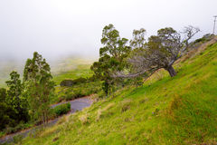 Grassy landscape of the Big Island of Hawaii with fog in the background. Royalty Free Stock Photo