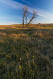 Grassy landscape with withered tree Royalty Free Stock Photography