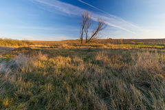 Grassy landscape with withered tree Royalty Free Stock Photos