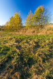 Grassy landscape with withered tree Royalty Free Stock Image