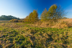 Grassy landscape with withered tree Stock Photo