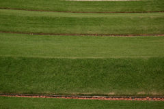 Grassy lawn Stock Images