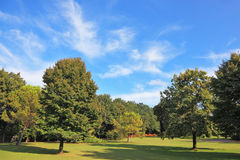 The grassy lawn is surrounded with coniferous trees Royalty Free Stock Images