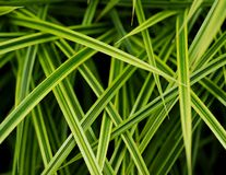 Grassy Leaf Royalty Free Stock Image