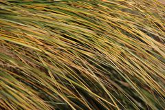 Grassy Leaves. Close up colorful grassy on baltic seaside. sunny day in Usedom island Germany stock photos