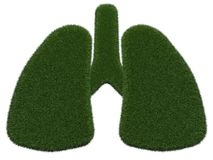 Grassy lungs on white background.  digital illustration. 3d rendering. Graphic image with grass Stock Photography