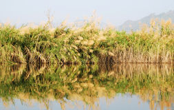 Grassy marshland Stock Images