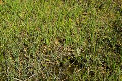 Grassy marshland with standing water Stock Image