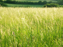 Grassy Meadow Stock Photo