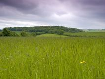 Grassy Meadow. Against a moody sky royalty free stock photography
