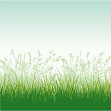 Grassy meadow Royalty Free Stock Photo