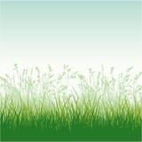 Grassy meadow. Vector skyline wallpaper stock illustration