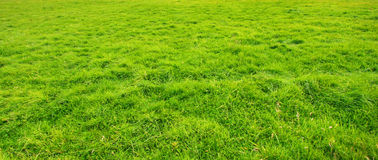 Grassy meadow background Royalty Free Stock Photo